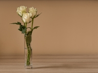 Rose Trio By Tim Amphlett - Commended in Open Pictorial