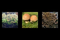First Place - Autumn Fungi By Peter Cotton