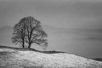 Third Place - The First Snow Of Winter By Gordon Watson